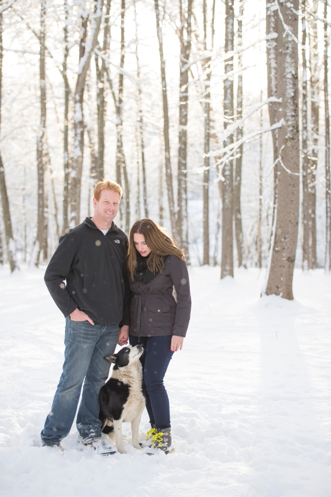 5-boarder-collie-engagement