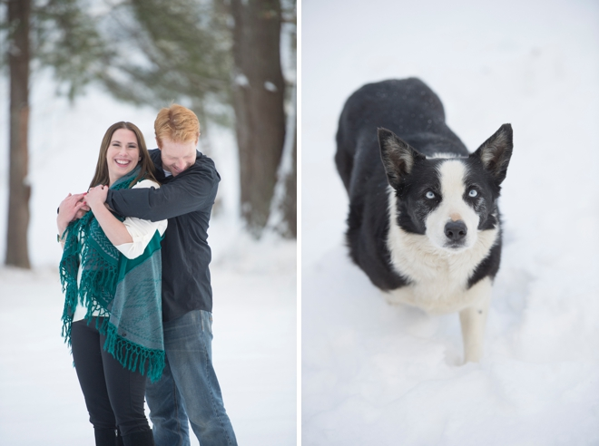 7-border-collie-engagement-snow